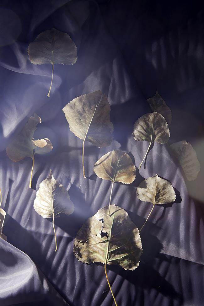leavespurplelining