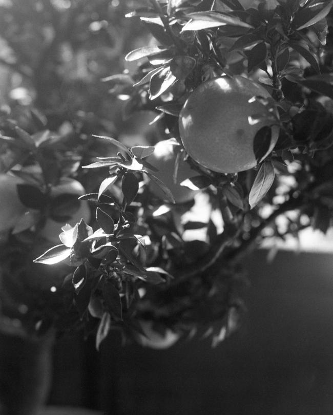 grantwilling_untitled_untitled-citrus-01