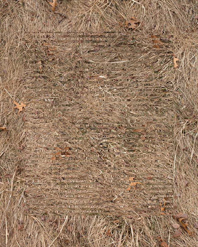 grass-grain-20x-print1