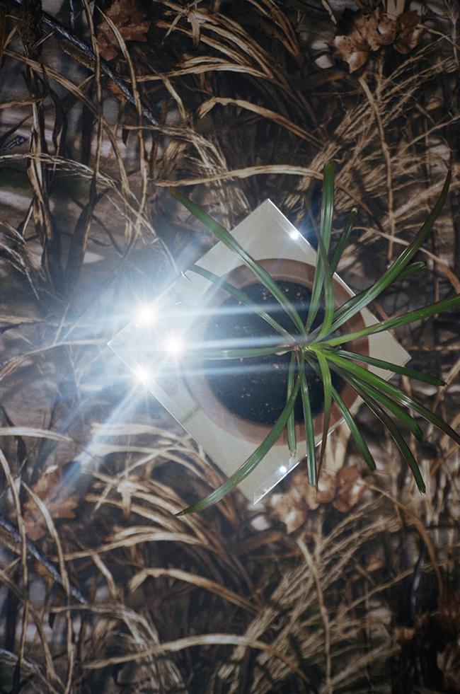 1.Plant_Josefineseifert