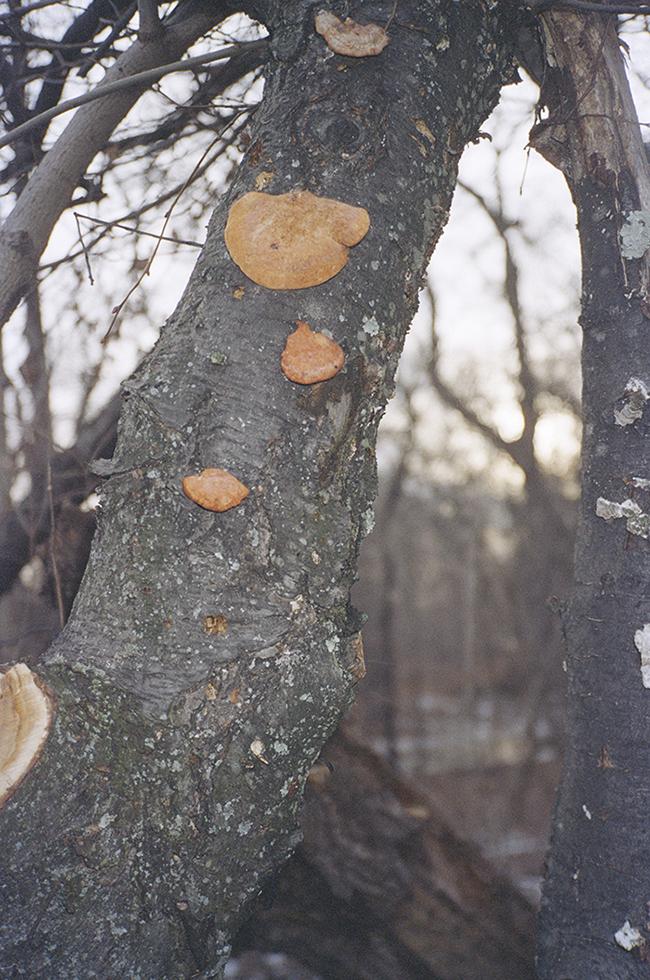 12.treefungus_Josefineseifert