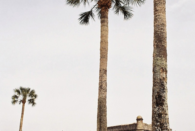 st-augustine-palms