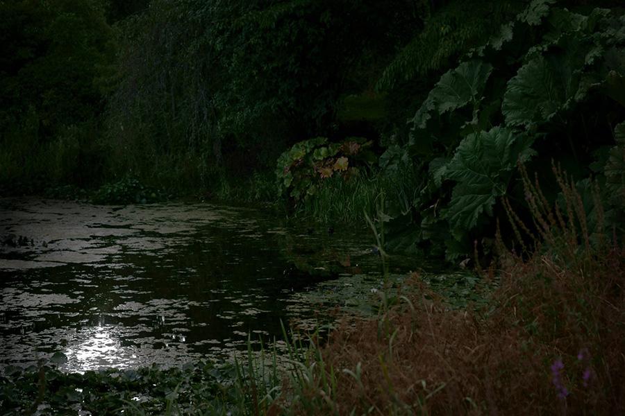 lotus_pond