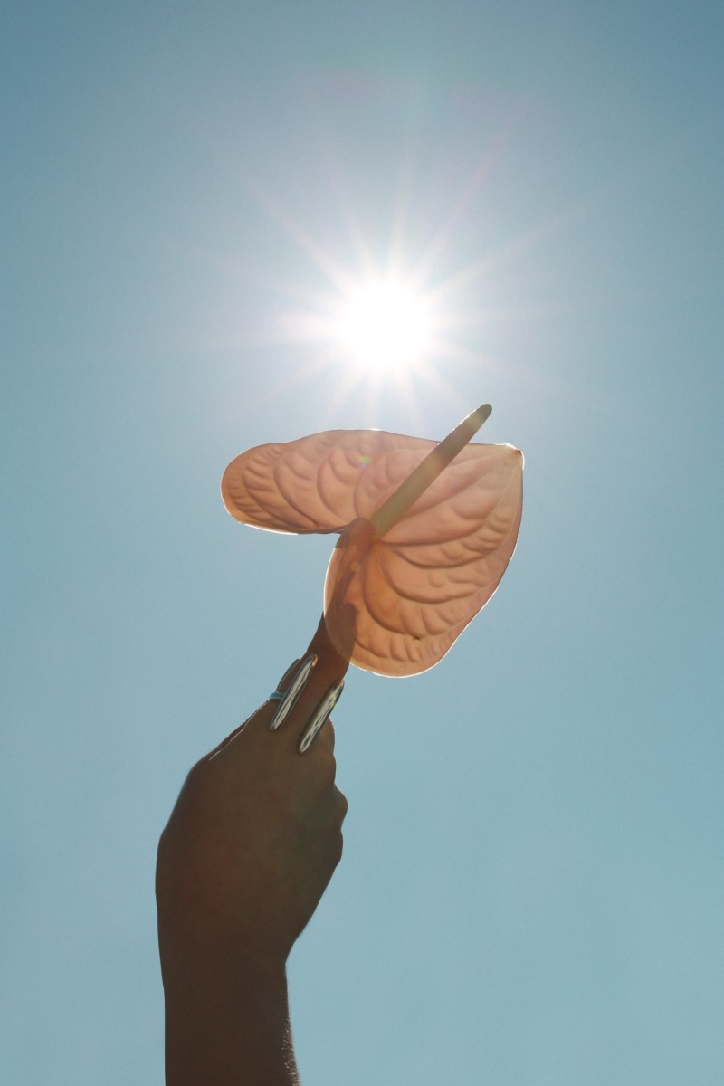 A hand offers up a flower to the relentless sun in the pure blue sky