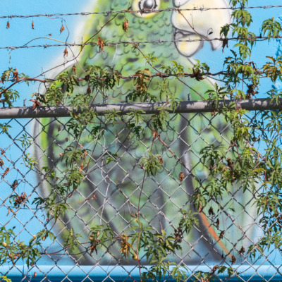 A mural of a happy parrot, penned in by a barbed wire fence.
