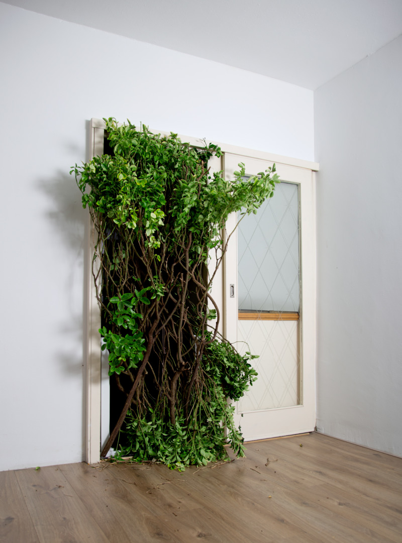 Branches and leaves burst through the door of a room.