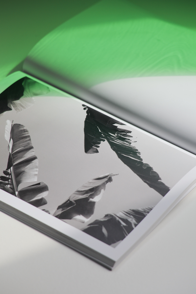 inside spread of a book showing a black and white image of a palm tree leaves