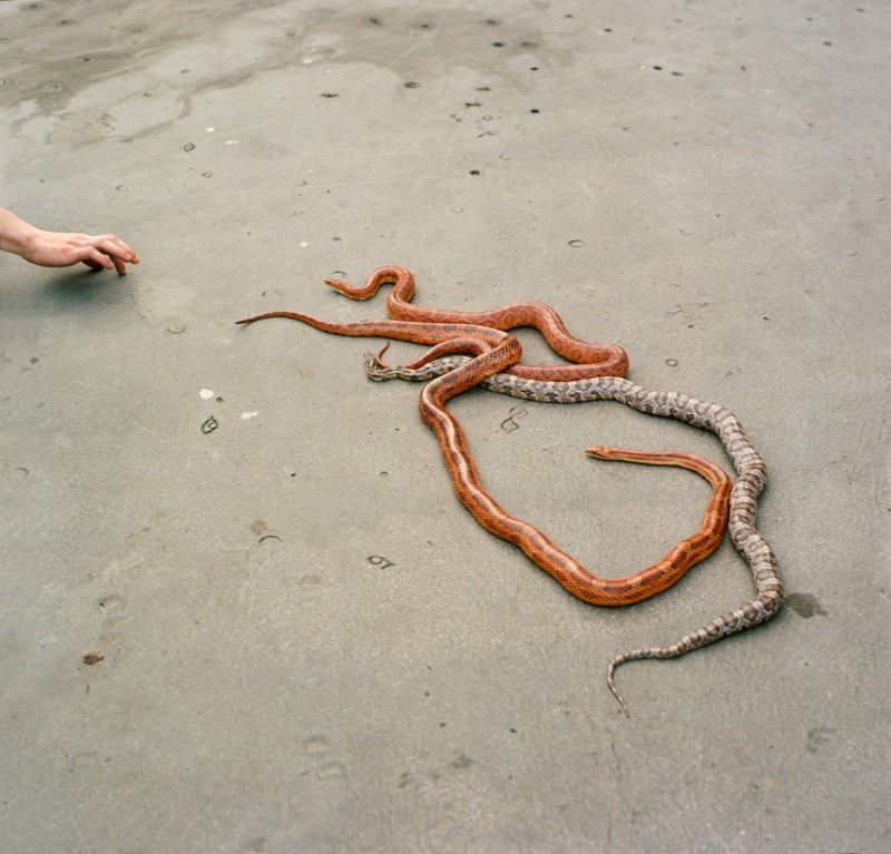 A hand reaches out to grasp three snakes.