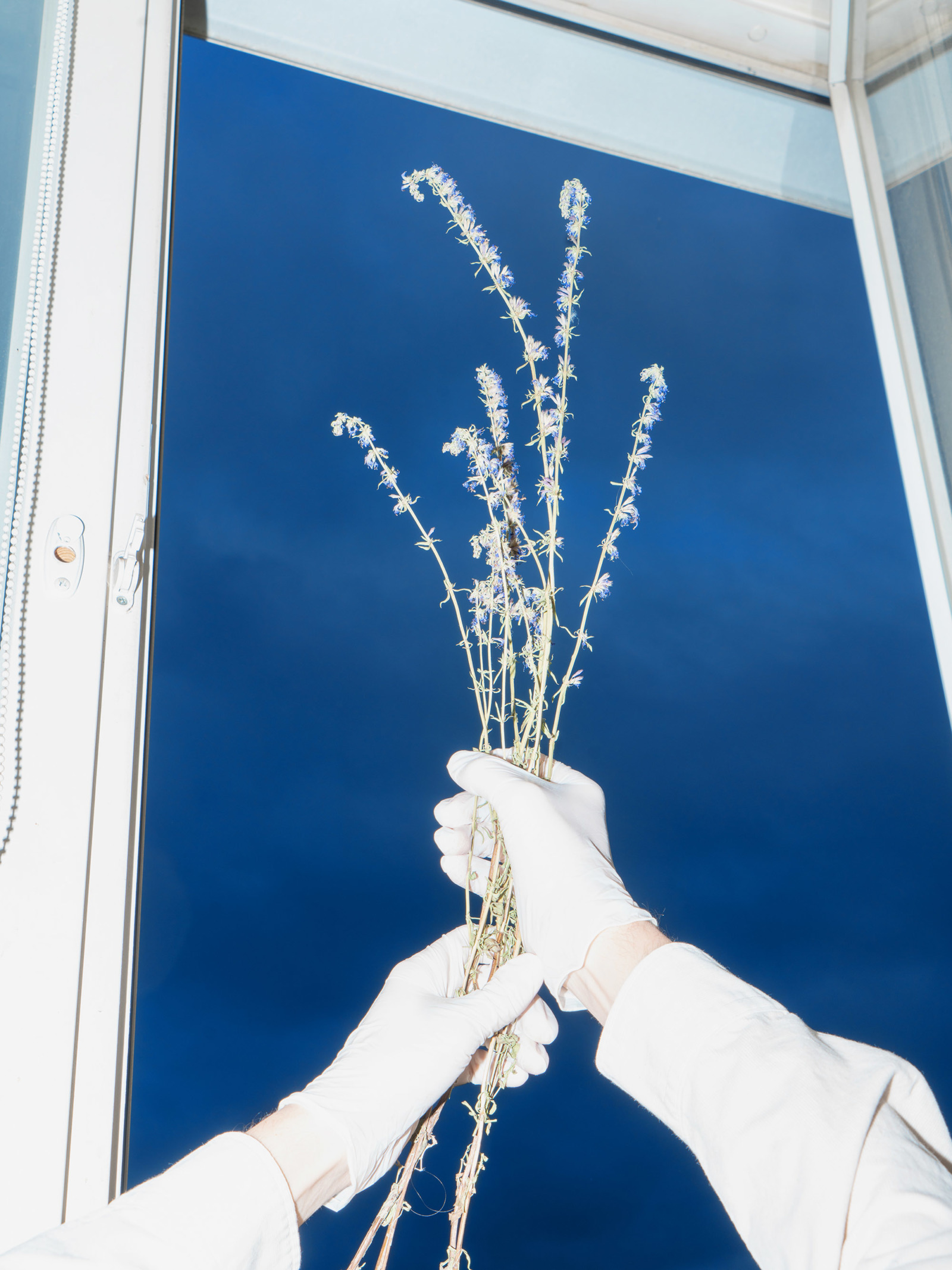 A pair of gloves hands hold up branches to the dark, blue sky.